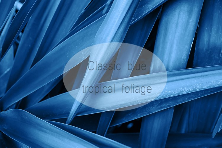 Tropical nature foliage background in dark blue example image 1
