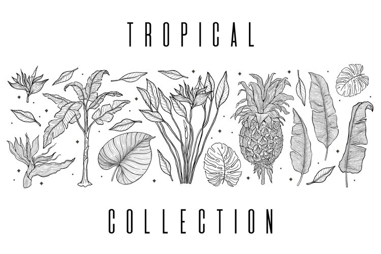 Tropical summer collection line