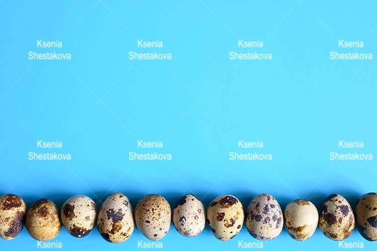 row of quail eggs on a blue background. space for text example image 1