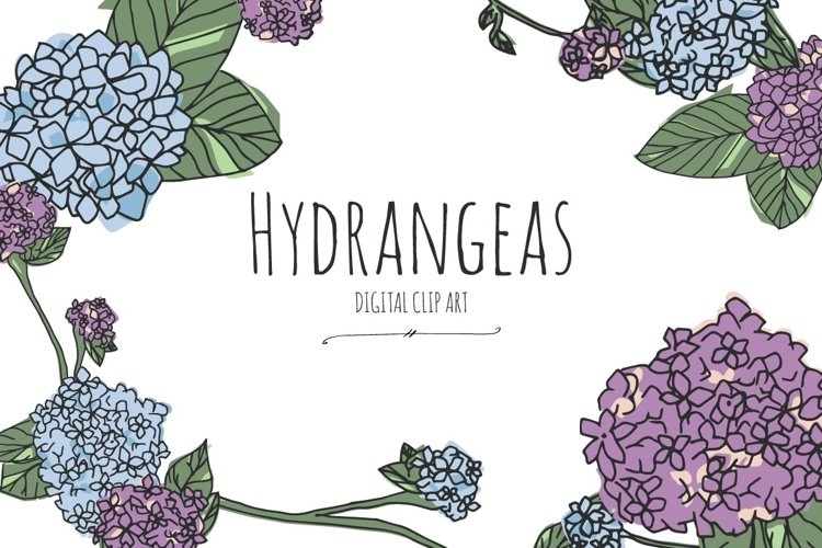 Hydrangeas - Digital Clip Art example image 1