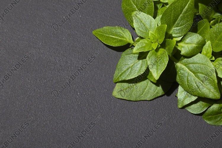Basil leaves border on dark background. example image 1