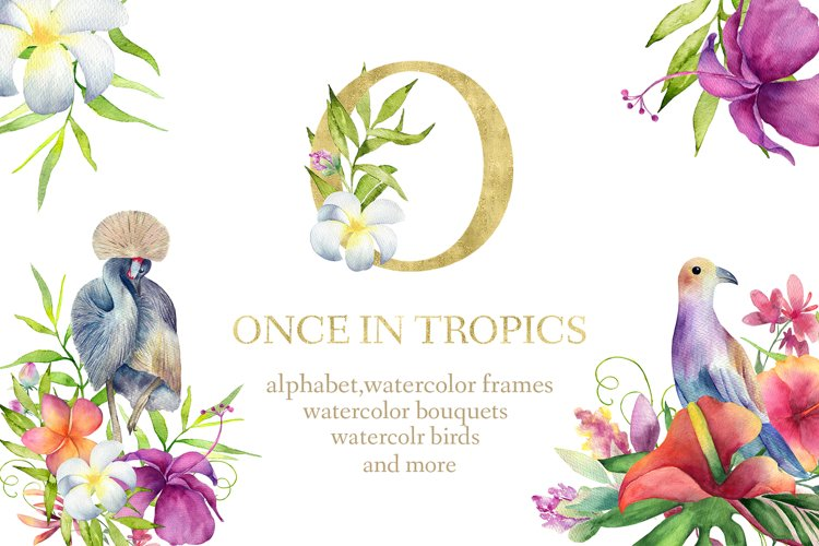 ONCE IN TROPICS example image 1