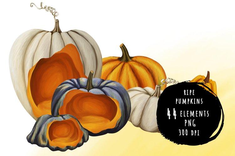 Drawn carved ripe pumpkins bundle