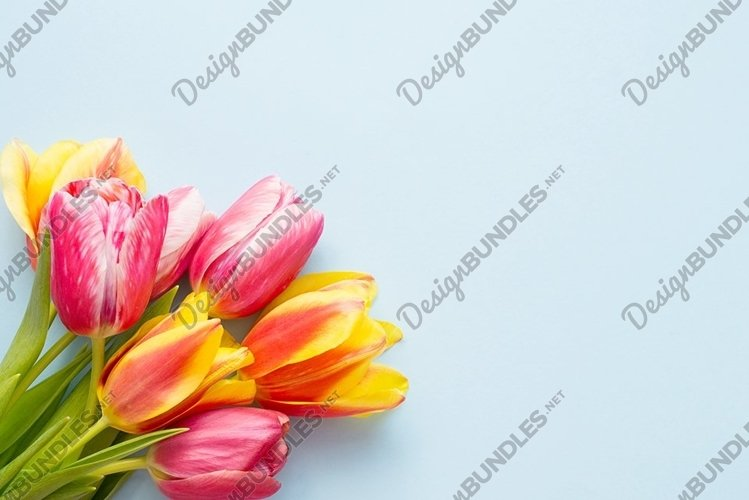 Beautiful colorful tulips on a light blue background example image 1