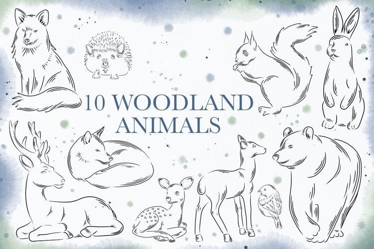 10 Woodland animals PNG