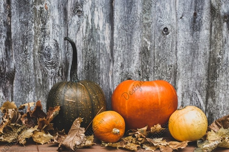 autumn still life or concept of decorative pumpkins example image 1
