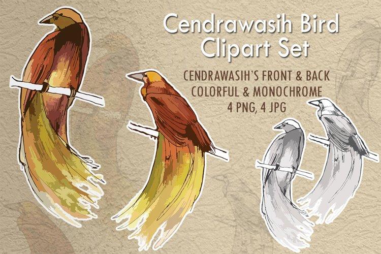 Cendrawasih Bird Clipart Set