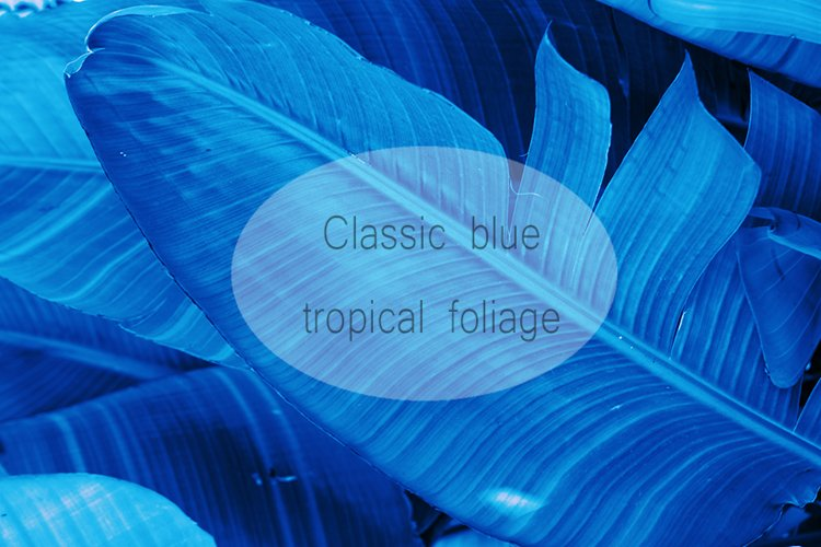 Tropical nature palm tree leaves toned in dark blue example image 1