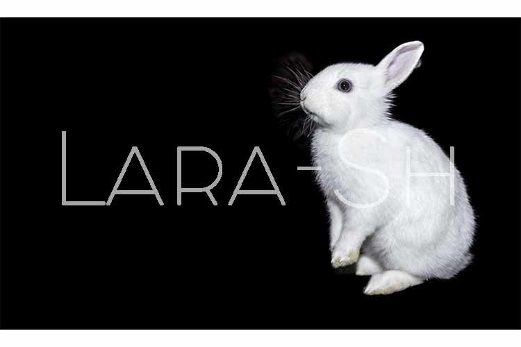 Little white rabbit/ bunny sits on hind legs on black