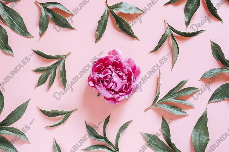 pattern of blooming peony flower on pink background flat lay