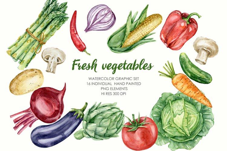 Watercolor Vegetables Clipart. Food illustrations PNG