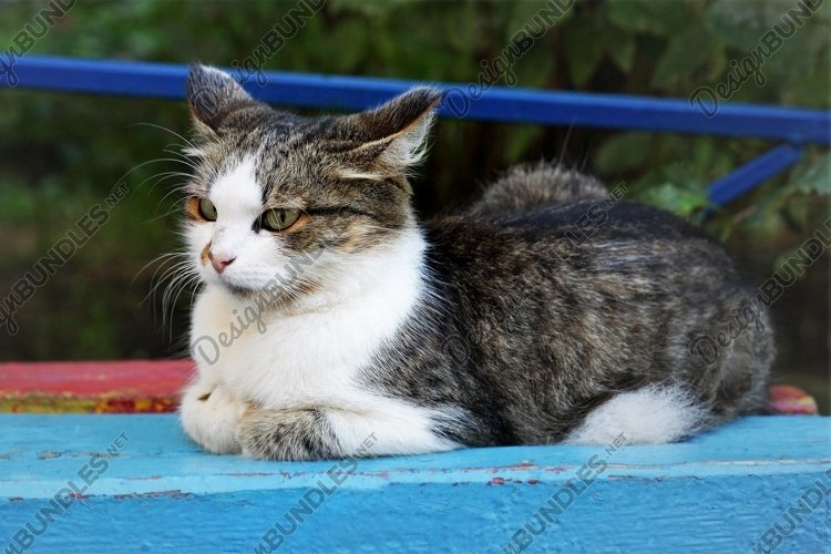 Spotted cat lying on an old colorful bench. example image 1