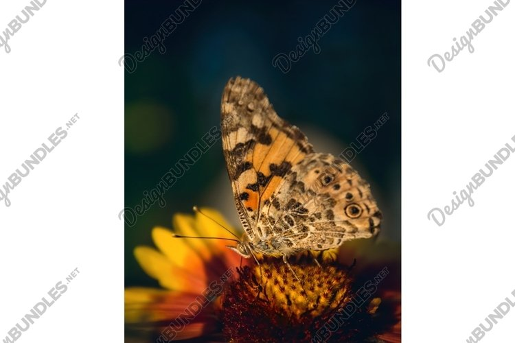 Butterfly and summer flower of the field example image 1
