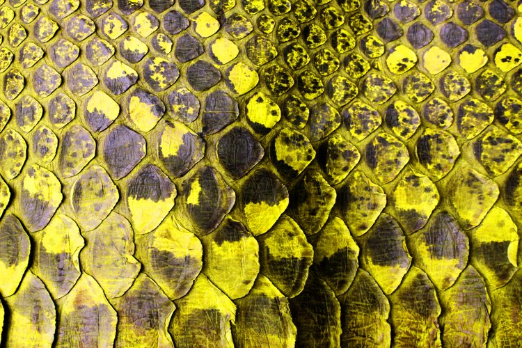 Close Up of Abstract Yellow Real Snake Skin Snake Print example image 1