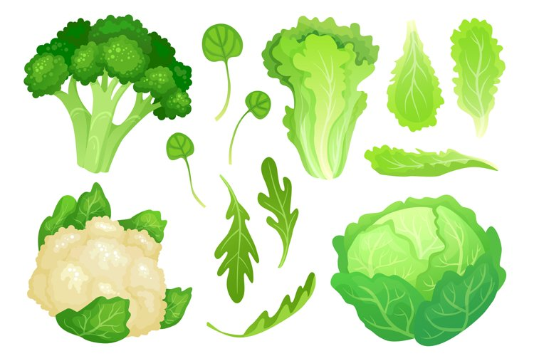 Cartoon cabbages. Fresh lettuce leaves, vegetarian diet sala example image 1
