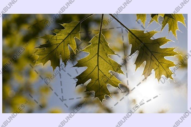 oak foliage against sky example image 1
