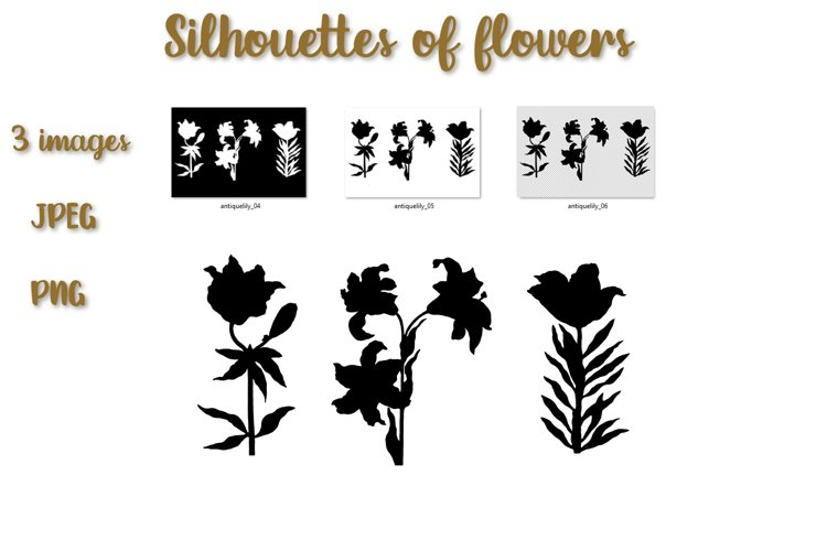 Floral illustration. Silhouettes of lilies