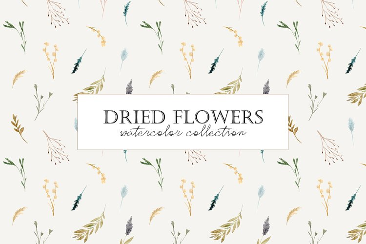 Dried Flowers. Watercolor Collection. Patterns and Cliparts example image 1