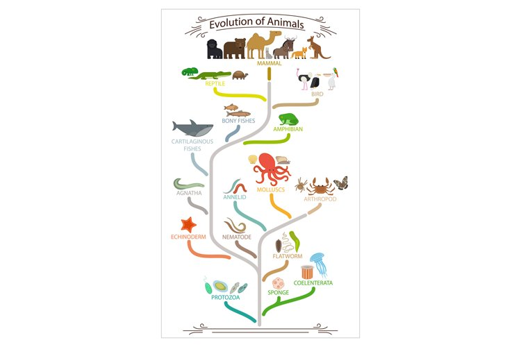 Biological evolution animals scheme example image 1