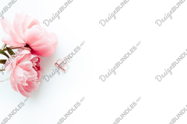 Photo with pink peonies on white background, flatlay