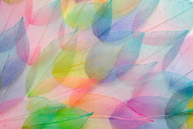 Colored leaves. Leaf texture pattern. Macro leaves texture example image 1