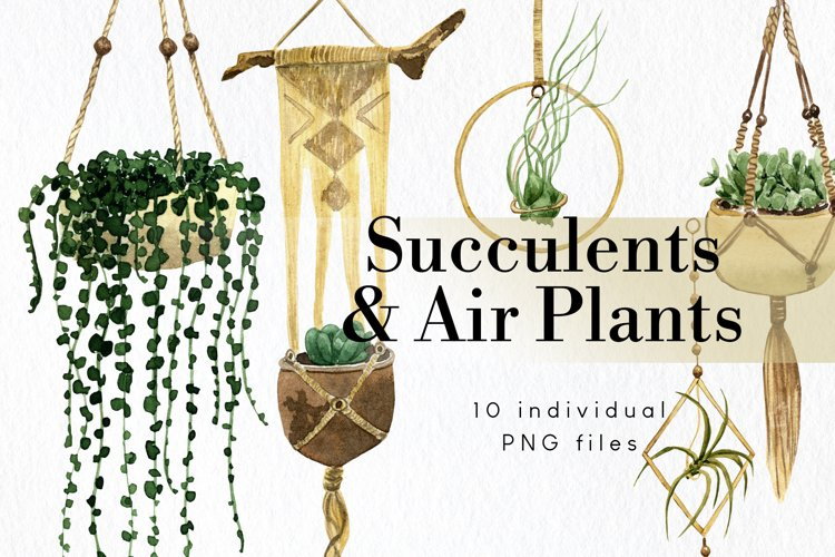 Hanging Succulents and Air Plants Clipart Set