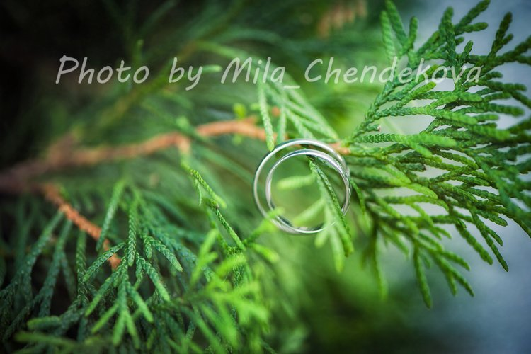 Two Gold wedding rings on the grass. Creative wedding