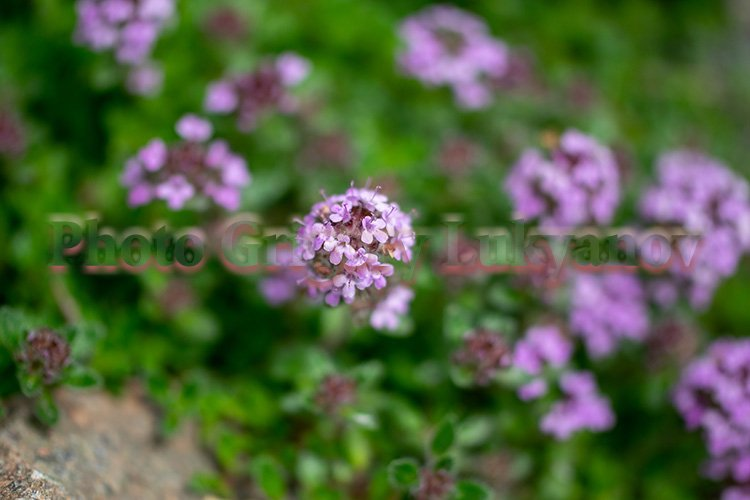 Stock Photo - Bright flower close-up on a summer day example image 1