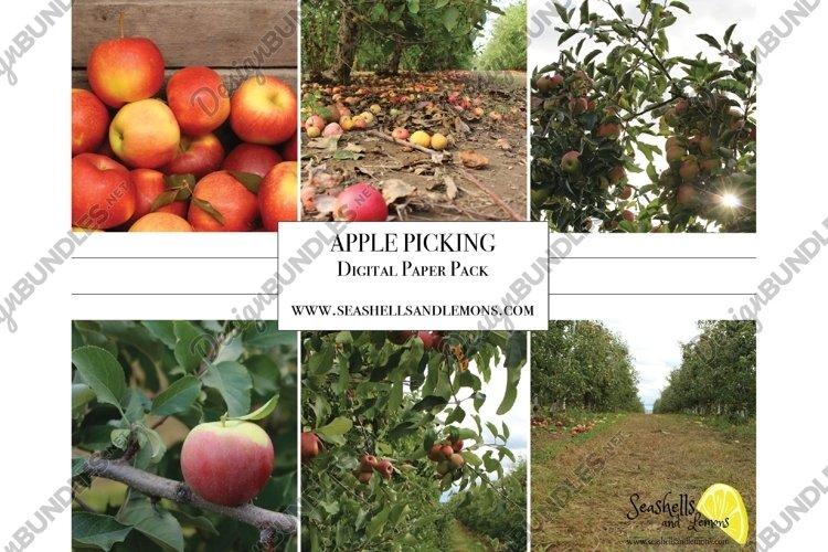 Apple Picking Photo Bundle example image 1