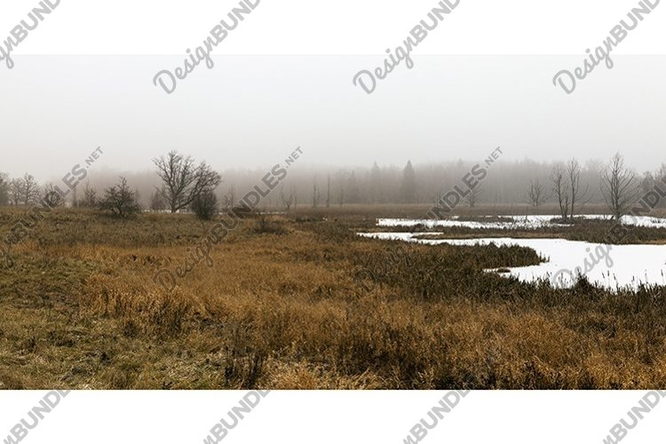 winter landscape in a swamp with frozen water example image 1