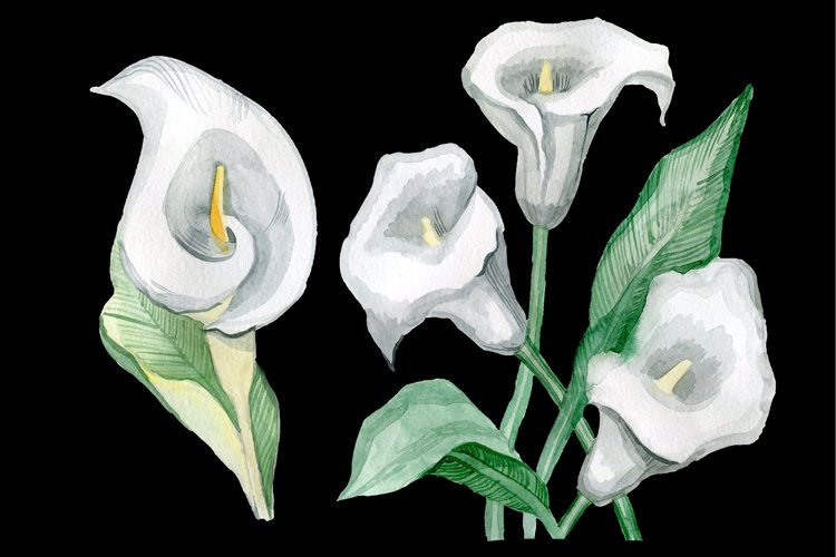 Watercolor flowers Calla example image 1