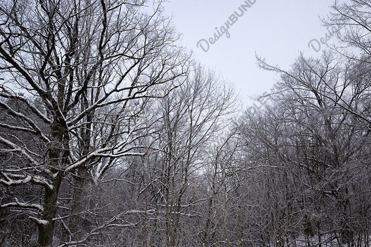 white fresh snow in forest example image 1