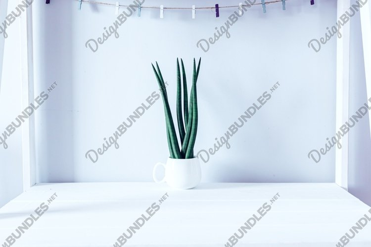 Sansevieria, succulent on table and a light background example image 1