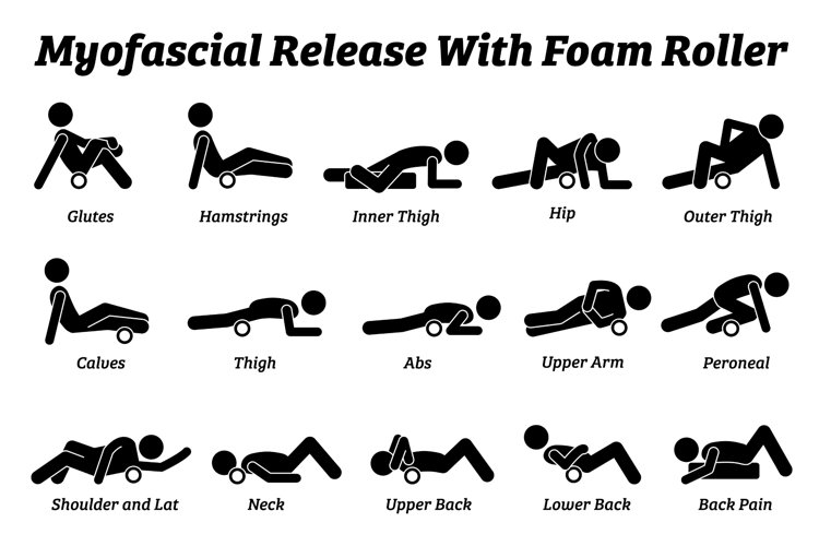 Myofascial Release Foam Roller Physical Therapy Body Parts