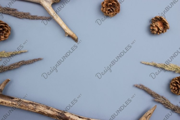 Wooden branches, fir cones, dry grass. Forest background