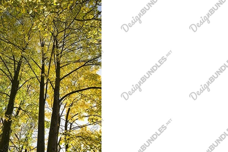 foliage in autumn, bottom view example image 1
