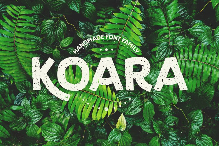 Koara example image 1