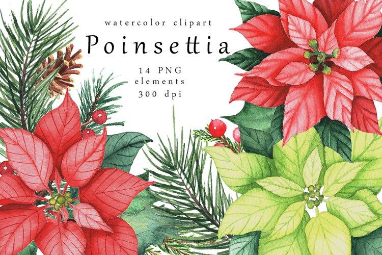 Watercolor Poinsettia clipart