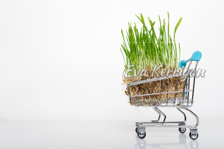 A small toy cart from the supermarket is superfood. example image 1