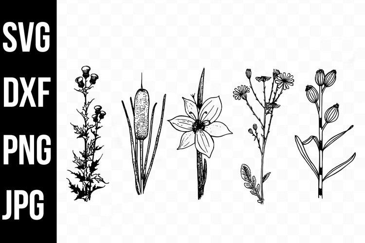 Wildflowers svg, Wildflower Illustrations, Flower svg, png