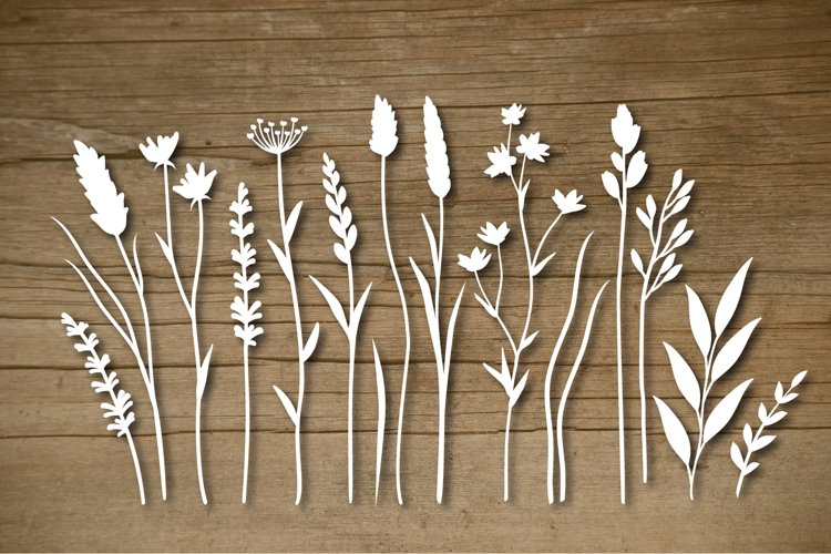 Wild herbs, plants and flowers, Vector design elements. SVG