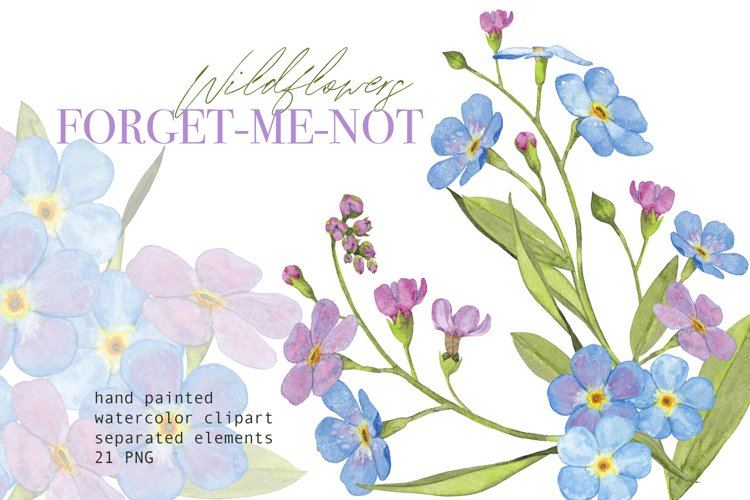 Watercolor floral clipart Forget-me-not blue wildflowers PNG