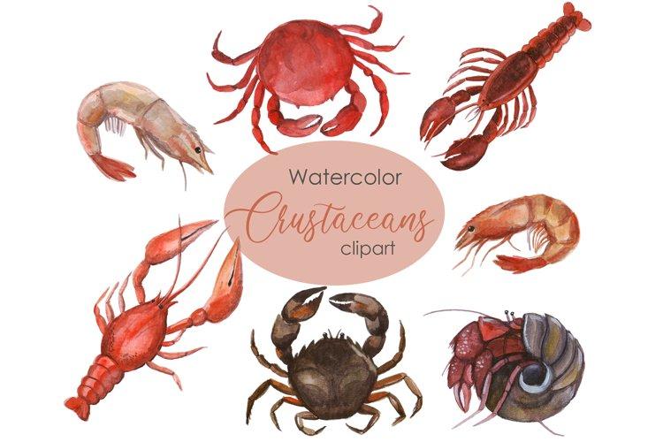Watercolor Crustacean Clipart. Nautical Clipart example image 1