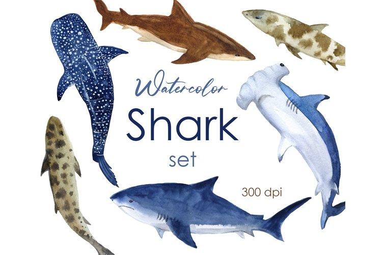 Watercolor clipart. Baby shark clipart. Shark Watercolor PNG