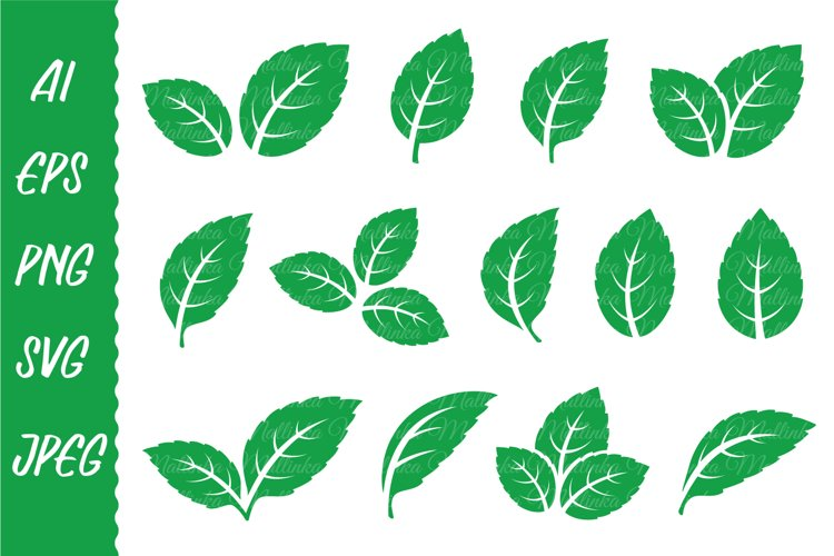 Hand drawn leaves svg, branch svg, olive, mint, tea, laurel