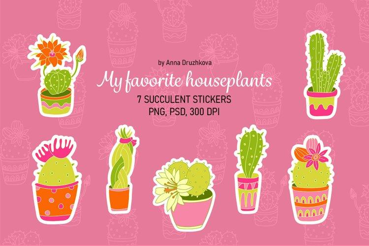 My favorite houseplants cacti