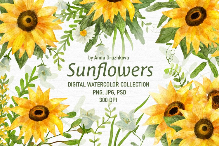 Sunflower Digital Watercolor collection