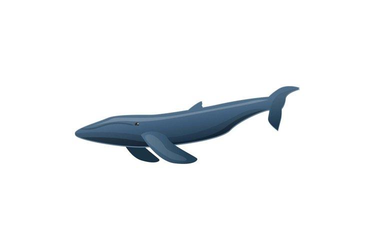 Sei whale icon, cartoon style example image 1