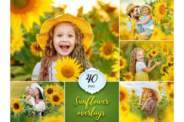 40 Sunflower Photo Overlays example image 1