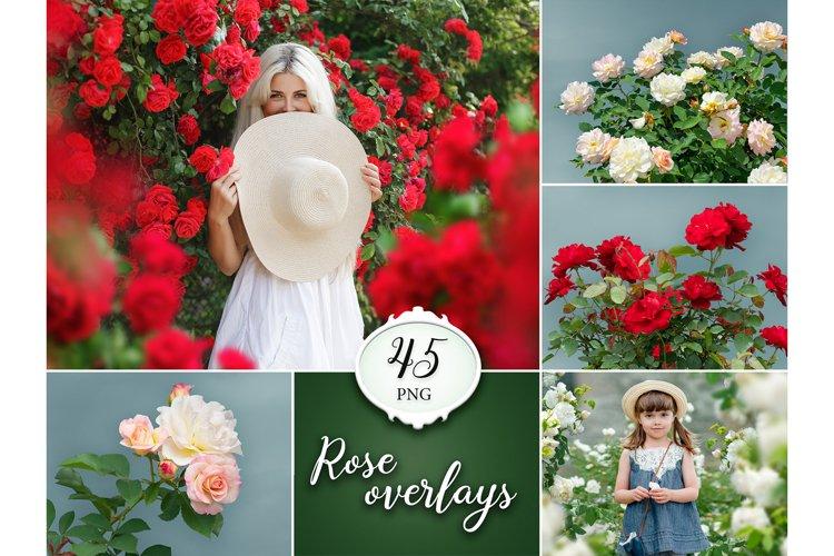 45 Rose Photo Overlays example image 1
